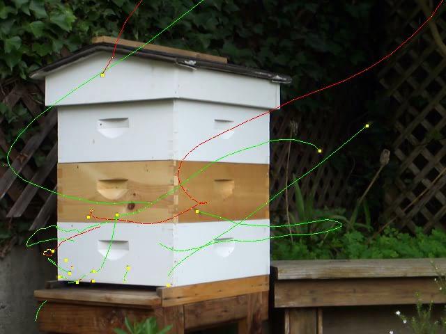 Bee Tracking